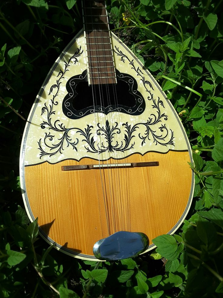 Bouzouki amongst oregano