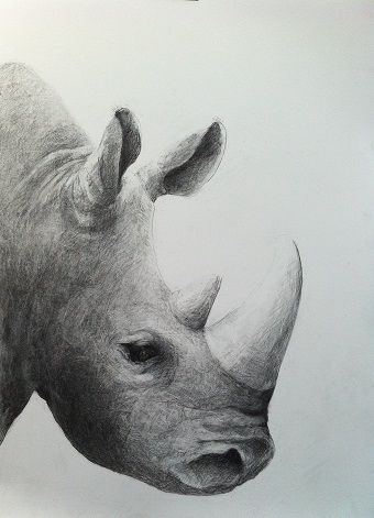 Rhino. Gallery Nyman represents art by the Danish artist Cecilie Nyman. Black chalk drawings, paintings, ink and watercolor.