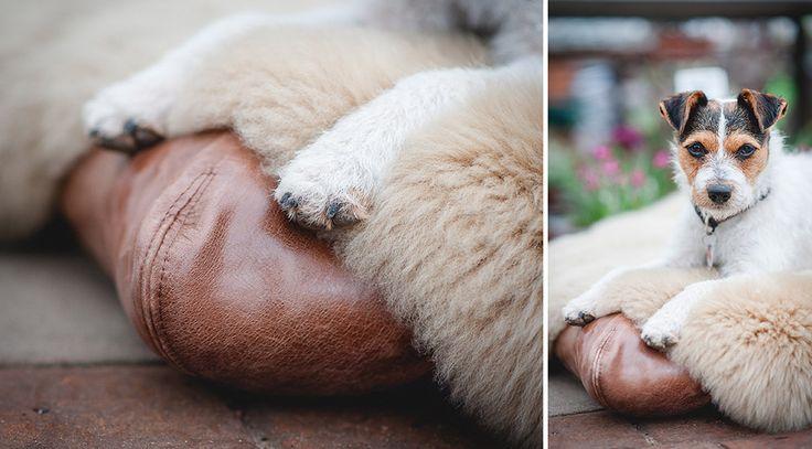 Fotoshooting mit den neuen, traumhaften Hundedecken