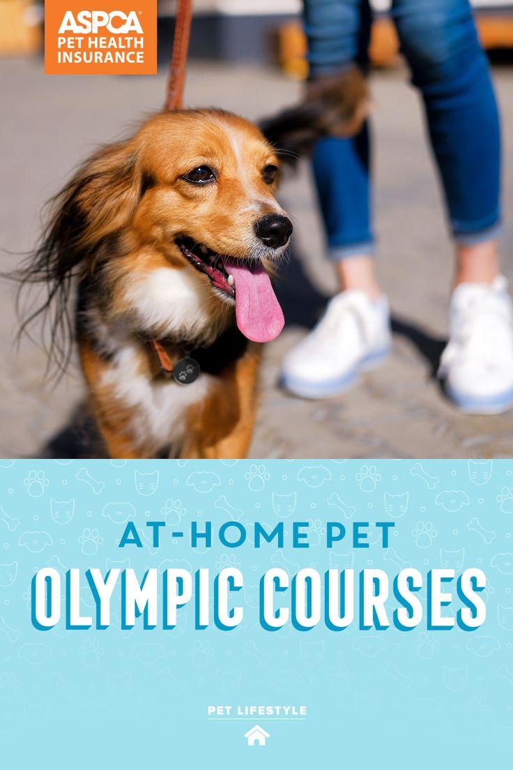 Pet Parent Resources ASPCA® Pet Health Insurance in 2020