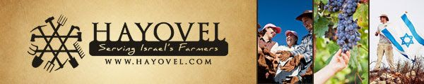 HaYovel: Harvest Plans and Livestream Event! | The WatchMen from Israel - News