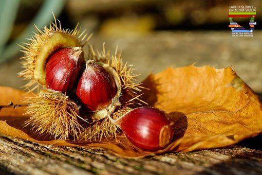 Le castagne dell'Etna I castagneti si trovano in tutti i versanti dell'Etna e rappresentano uno degli spettacoli più affascinanti che la natura del vulcano ci offre. Dall'inizio di ottobre e per buona parte del mese di novembre i boschi dell'Etna regalano grandi quantità di frutti, inclusi anche i marroni. Le castagne dell'Etna hanno un gusto e un sapore unico, grazie al terreno che è lavico e ricco di minerali. Le castagne vengono usate in cucina sia per piatti dolci che per quelli salati.