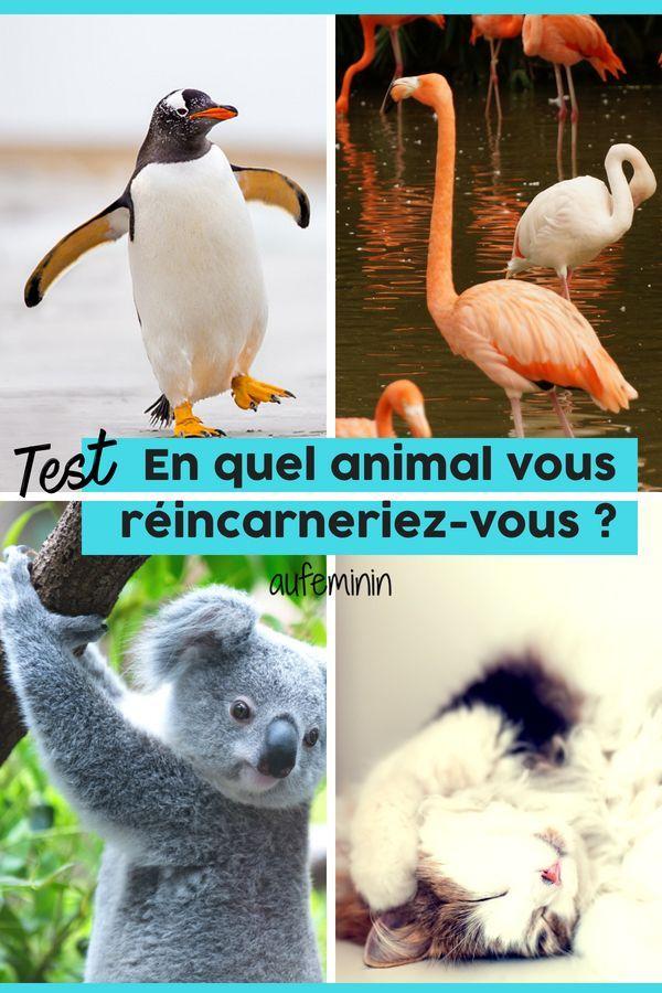 Quiz Quel Animal Es Tu : animal, Épinglé, Animaux, Chats,, Chiens,