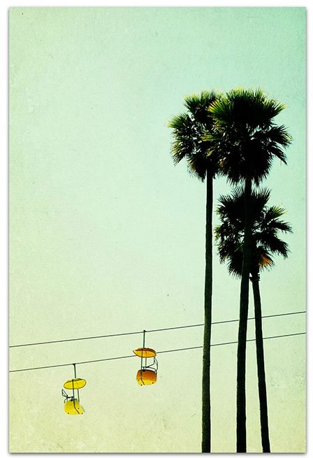 Boardwalk Palms Print
