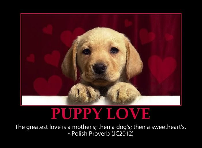 Yep That S Right Too Cute Puppies Love Puppy Love Quotes