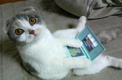 Cats and Video Games