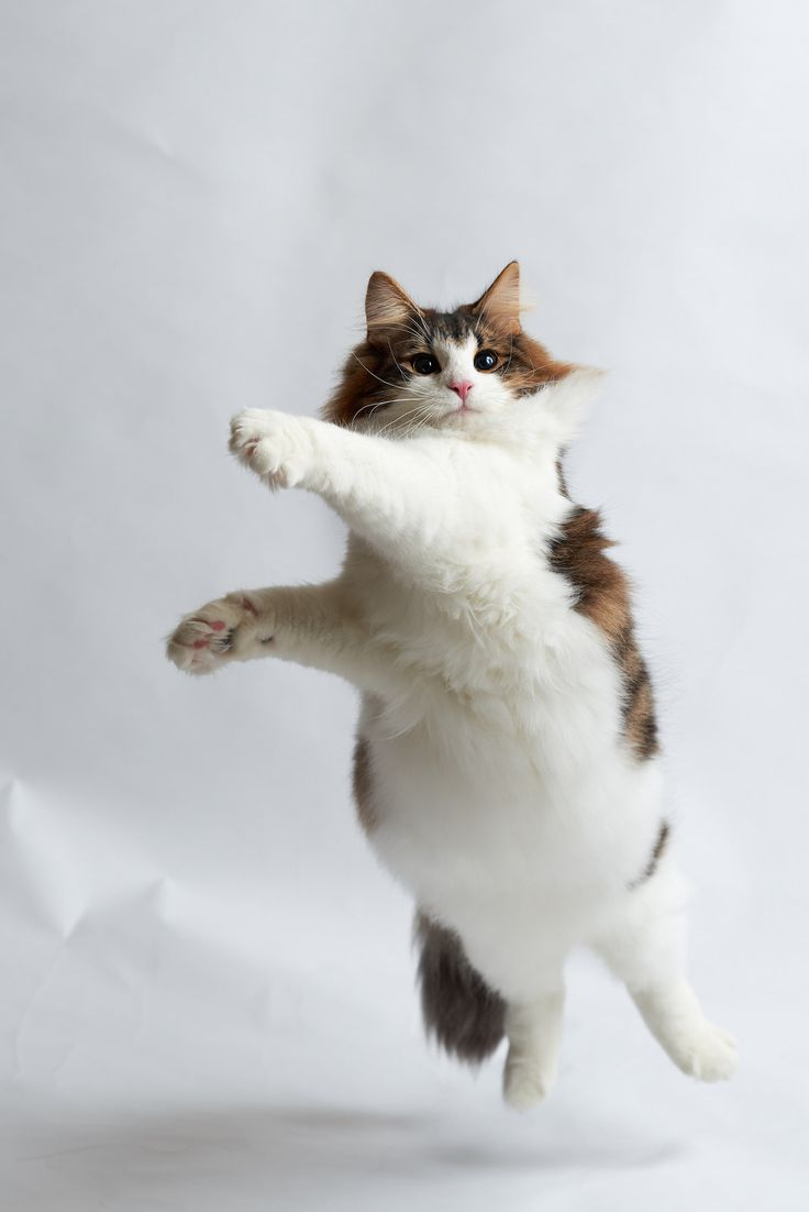 Getting aerobics done early in the day #cats