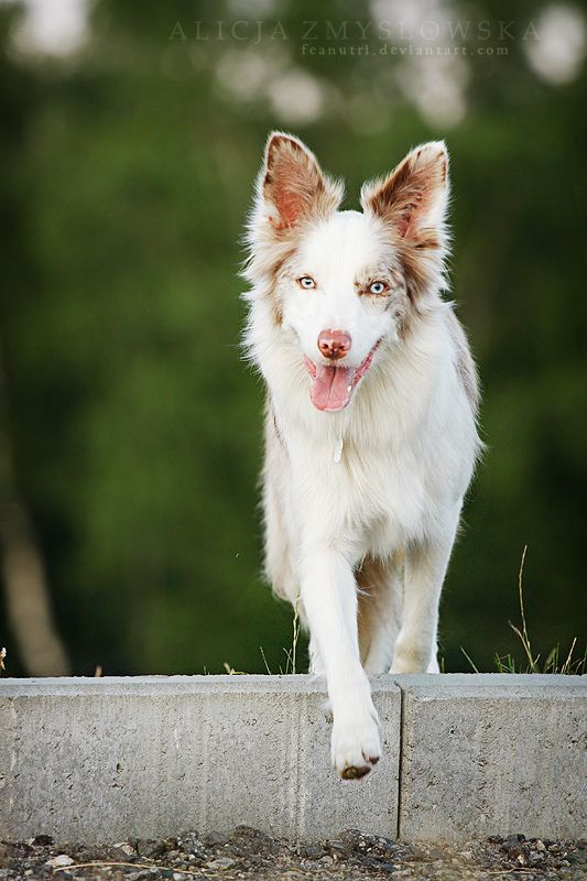 Breeding Half Sibling Dogs