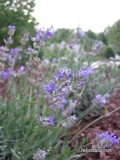Tavaly+egy+gyógynövényes+posztban+írtam+arról,+hogy+van+Magyarországon+néhány+gyönyörű,+látogatható+gyógynövénykert,+sőt,+aki+szeretne+komolyabban+tanulni+a+gyógynövények+termesztéséről,+feldolgozásáról,+az+elmehet+gyógynövénykertészetekbe+-+akár+kolostoriakba+is+-…