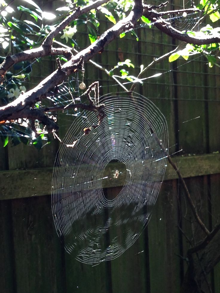 Friday January 8th The rain has stopped. Spiderweb lit up in the morning sun.