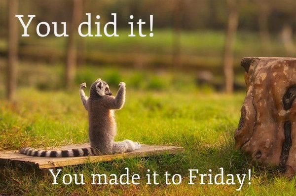 We Made A Wish And It Was You We Made: This Lemur Is Glad You Made It To Friday! #TGIF