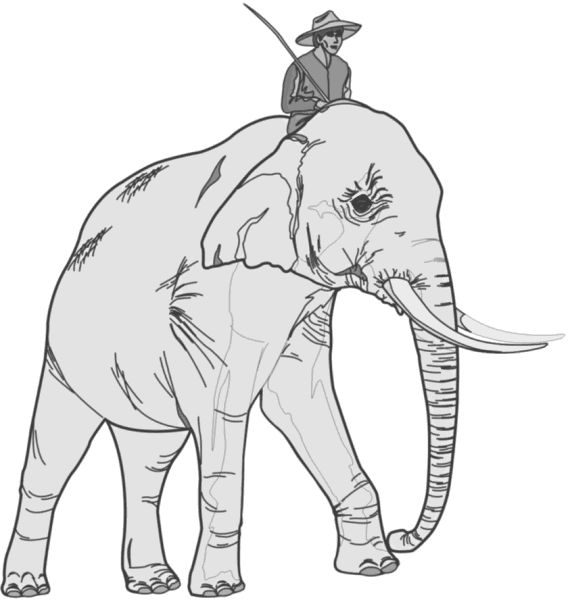 The Elephant & Weight Loss