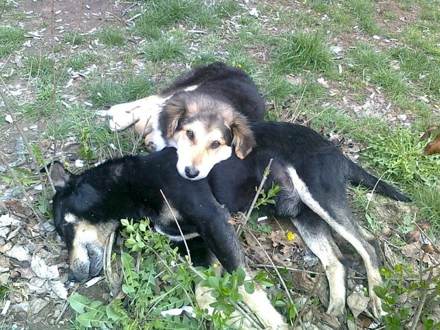 Nobody Touch The Dog - Stop Dog Cruelty and Tortures in Serbia