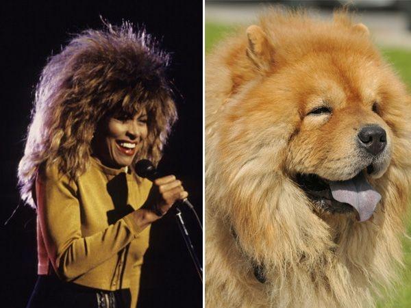 Separated At Birth: Animal Edition - Tina Turner