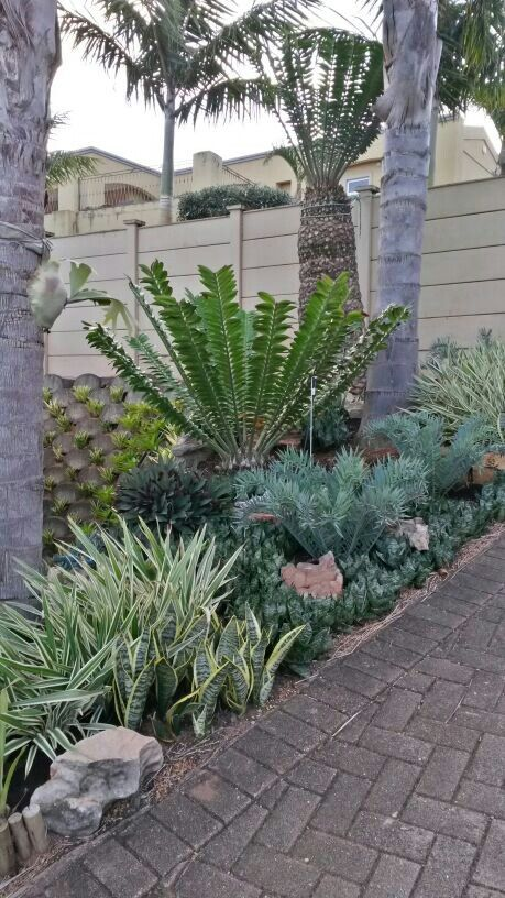 Cycads garden gardening exotic plants cycads for Cycas landscape design