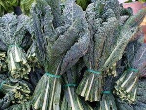 Jenis Sayuran Hidroponik Lacinato Dinosaur