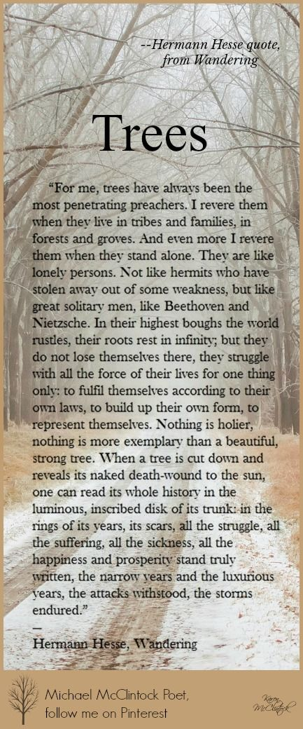 Trees quote (from Wandering) by Hermann Hesse.