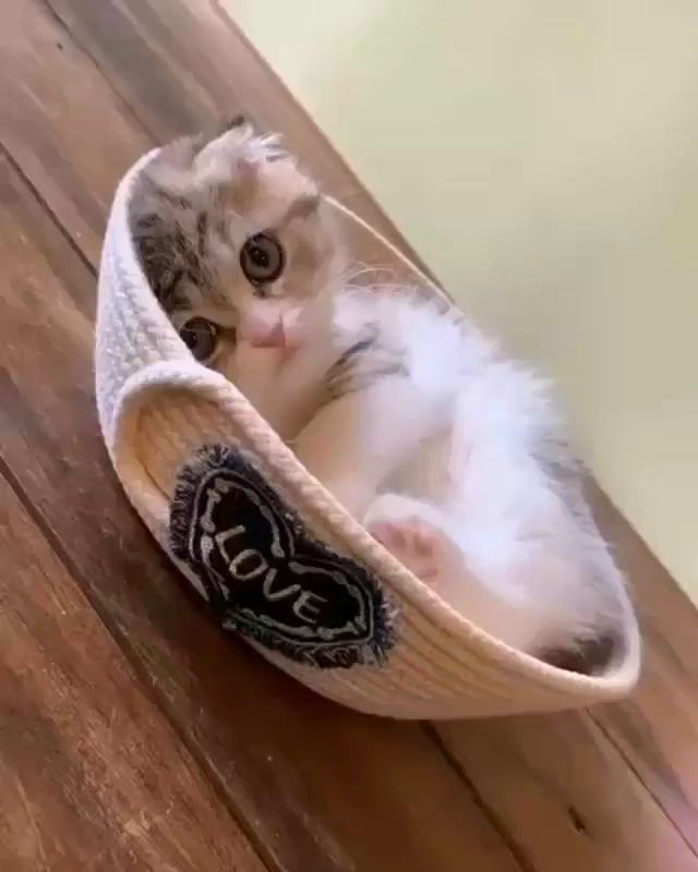 Lindo gatito ama nuevo cama