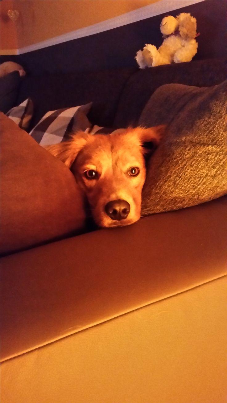 Hunde Foto: Ralf und SAM - Unser süßer Hier Dein Bild hochladen: http://ichliebehunde.com/hund-des-tages  #hund #hunde #hundebild #hundebilder #dog #dogs #dogfun  #dogpic #dogpictures