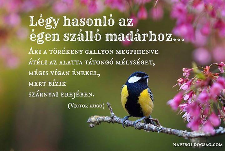 Victor Hugo gondolata az önbizalomról. A kép forrása: Napi Boldogság # Facebook