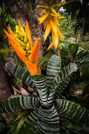 10 best images about planten on pinterest madagascar agaves and ferns. Black Bedroom Furniture Sets. Home Design Ideas