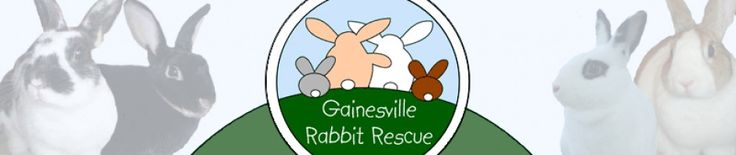 Volunteer or become a foster home for #rescued #rabbits with #Gainesville Rabbit #Rescue. #bunnies