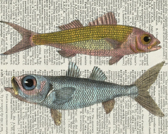 fish18oo's ruby snapper and bulls eye fish artwork by FauxKiss, $12.00