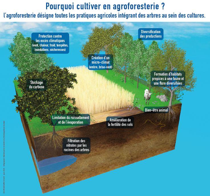 Paysan en agroforesterie - Participez à la transition énergétique pour la croissance verte