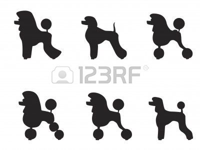black poodle clipped in various styles Stock Vector - 6131952