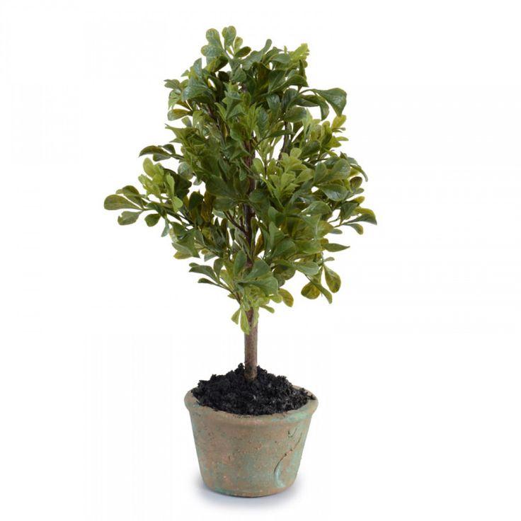 Mini-Boxwood Bush  #giftideas #giftunder100dollars #giftgiving #affordablegifts https://www.franceandson.com/