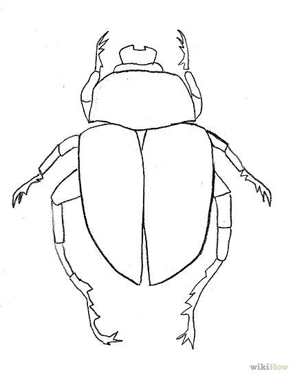how to draw beetle