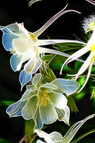 """Fractalius Columbine"" by B.L. Thorvilson 