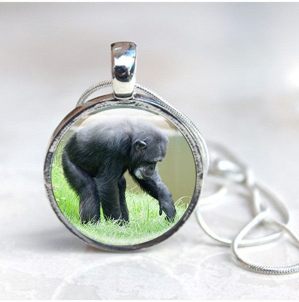 New to GlassCharmed on Etsy: Chimp Jewellery- Monkey necklace ape pendant animal jewellery Zoo animals. gift for animal lover monkey chimpanzee photo pendant (12.99 GBP)