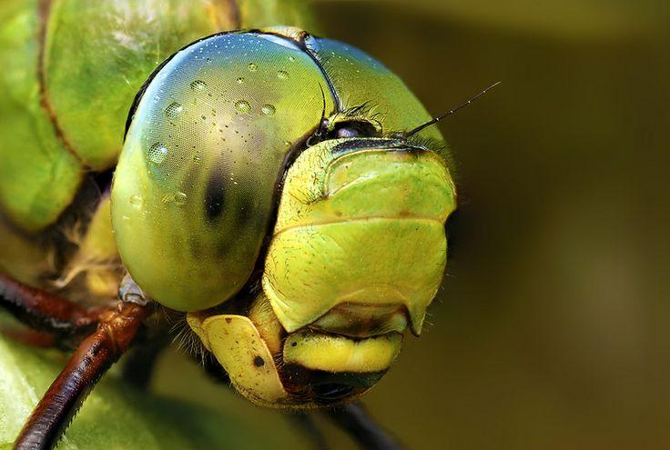 "500px / Photo ""Big"" by Ondrej Pakan: Astonish Macros, Insects Photography, Ondrej Pakan, Bugs Close, Photography 18, Design Astonish, Enjoying Insects, Macros Photography, Life Photography"