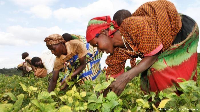 Dans le nord du Burundi, la Welthungerhilfe (Agro Action allemande) mène depuis 2010 un projet pour aider la population à gérer durablement ses récoltes... et ses conflits. Un reportage de Marie-Ange Pioerron.