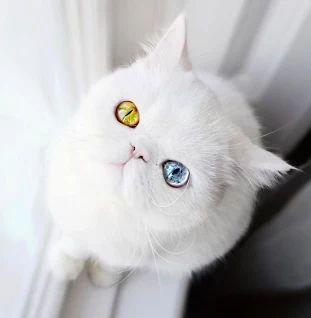 Котенок с необыкновенными глазами загипнотизировал Инстаграм