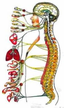 Why knowledge about your spine is power over your health http://www.examiner.com/article/world-spine-day-why-knowledge-about-your-spine-is-power-over-your-health