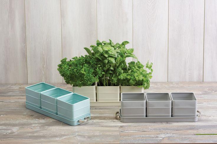 Zestaw 3 doniczek na zioła Kitchen Craft