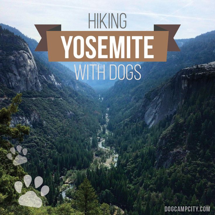best hiking and camping for yosemite national park with dogs