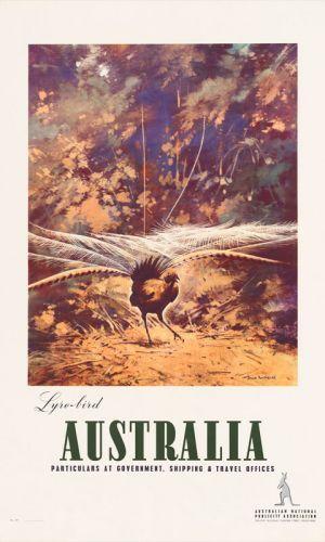 Lyrebird www.printism.com.au #realartinprint