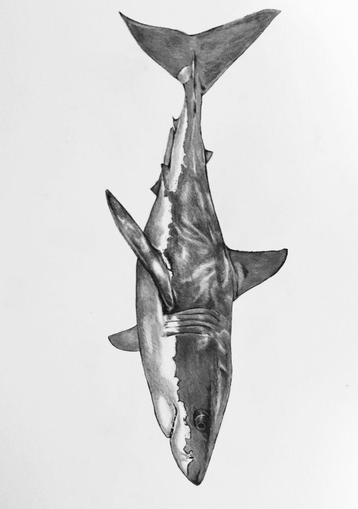 Shark wmcskills drawing design illustration great white