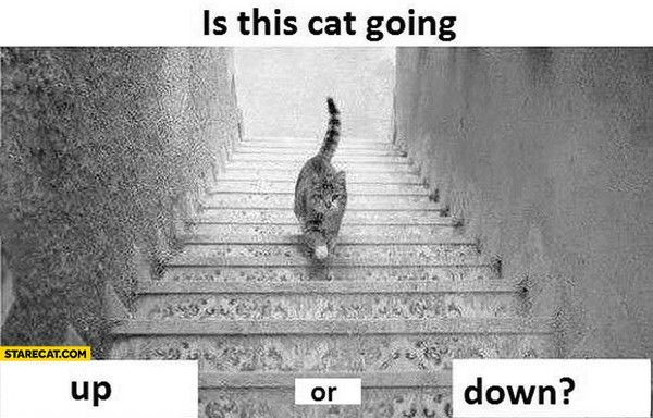 is-this-cat-going-up-or-down-d4d3b (1)