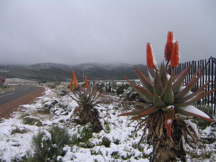 Winter in Oudtshoorn, South Africa!!!