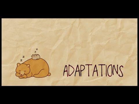Animal Adaptations                                                       …