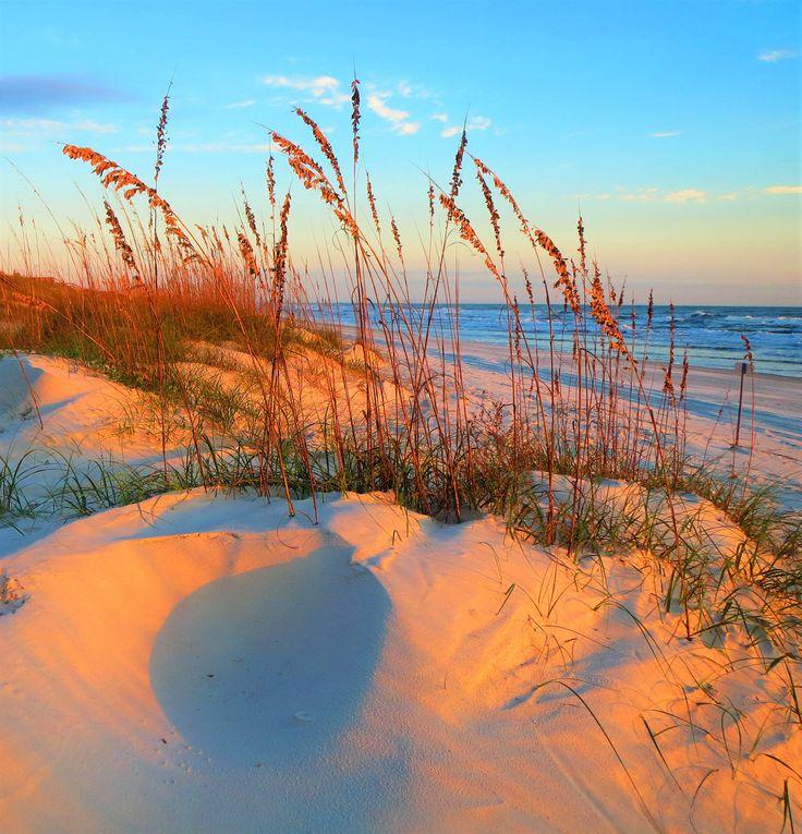 These sea oats | South Anastasia Island, Florida