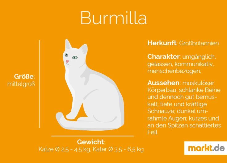 Don Sphynx Katzen Bayern