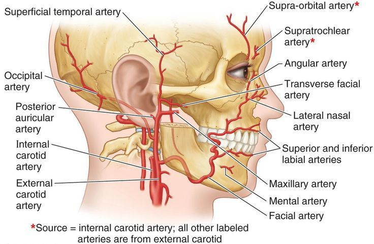 Arteries of the Face - branches of the external & internal carotid arteries