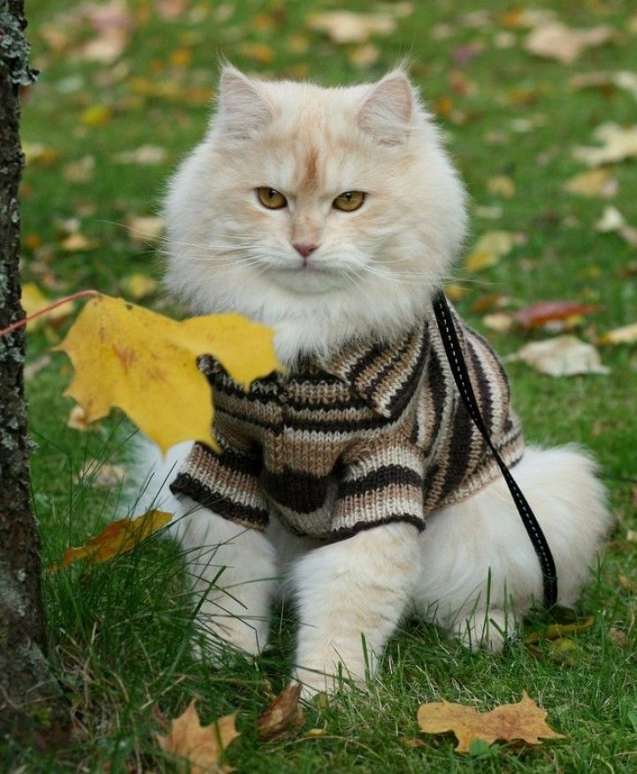This Pin was discovered by wuvely. Discover (and save) your own Pins on Pinterest. | See more about Not Happy, Happy and Cat.