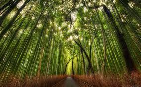 alberi verdi - Cerca con Google