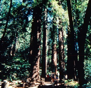 Red and White Fleet - Muir Woods & Sausalito Tour
